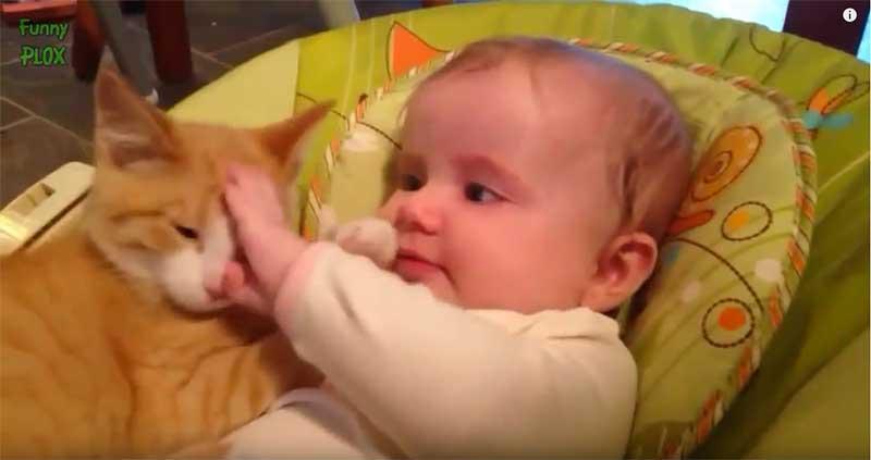 寶寶摸著貓咪的頭,眼露出關心的眼神。