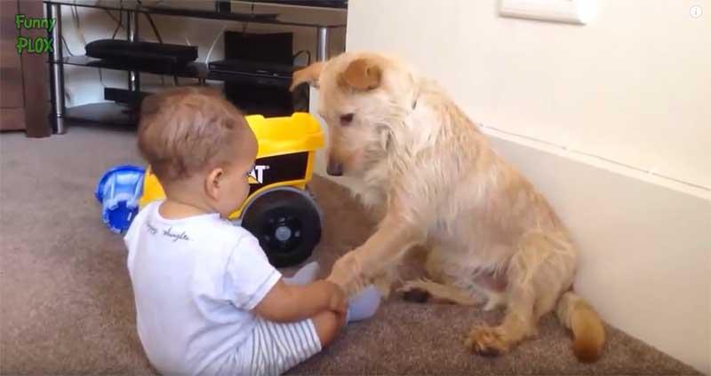 人狗世界,最重要的互動,都要從「有禮貌的握手」開始。