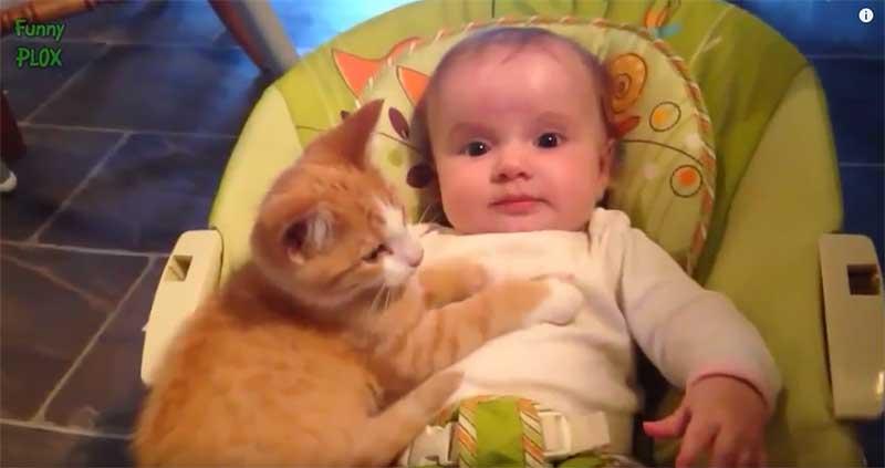 主人要我好好照顧寶寶哄他睡覺,喵嗚~