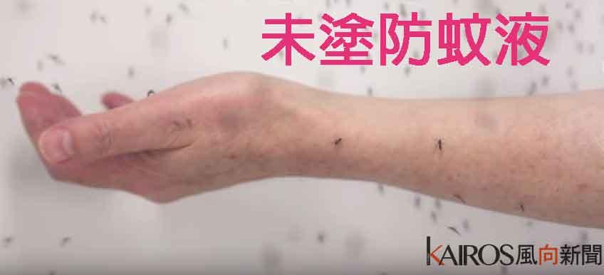 dengue fever2 (2)