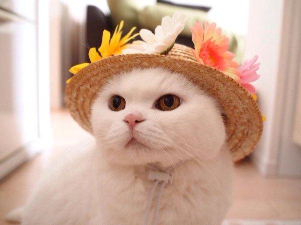 宇羅:身為一隻淑女貓,怎麼可以錯過鮮花草帽呢?