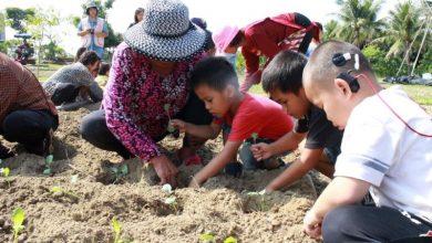 Photo of 88災後新力量 小米耕種讓孩子找回自信