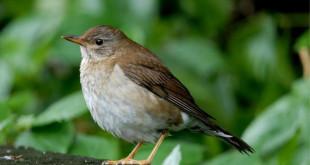 bird H5_meitu_1