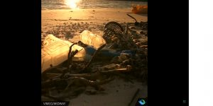 海邊到處都是被人類丟棄的塑膠製品及垃圾,已嚴重威脅到生物的生存。