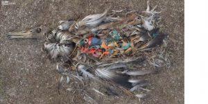一隻海鳥死後被發現胃裡面滿滿是許多塑膠製品的照片,令世人大為震驚。