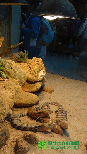 熱帶爬蟲類的動物們,紛紛躲在保溫燈下取暖。