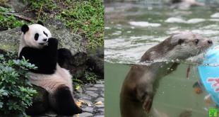 除了除夕當天,春節期間台北動物園正常營業。