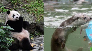 Photo of 猴年到!春節台北動物園活動滿滿