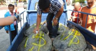宗教團體以噴漆在海龜背上寫字。〈圖片來源:Buddhist Life Mission 佛教生命协会臉書〉