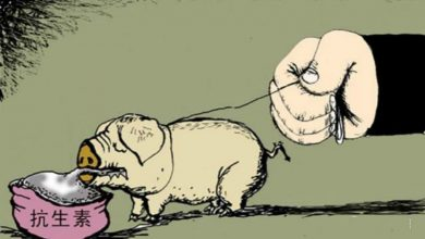 Photo of 吃肉如吃藥!台畜牧業濫用抗生素造成人體三大危害