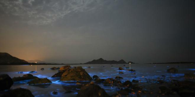馬祖近日已出現神秘的藍眼淚。〈圖片來源:翻攝Flickr mutolisp〉