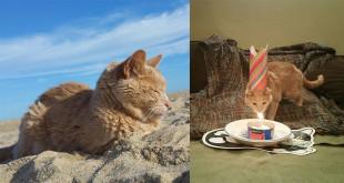美國一隻21歲貓咪Tigger,喜歡陽光和沙灘,而且擁有世界上最愛他的主人。(圖片來源:Tigger's Story臉書)