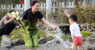 陽明山竹子湖海芋已漸漸開花,不少民眾紛紛前往觀賞。(圖片來源:北投區農會)