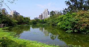 大安森林公園生態水池。〈圖片來源:翻攝維基〉