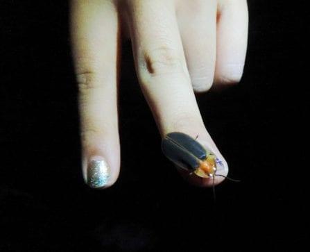 停留在小朋友手指上的螢火蟲。〈圖片來源:工務局〉