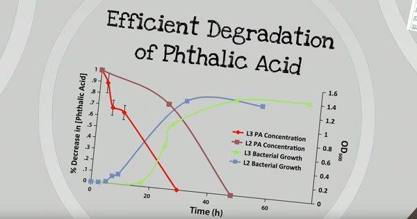 佳韵與郁雯研究,當細菌濃度增加,鄰苯二甲酸酯濃度也相對降低。(圖片摘自youtube)
