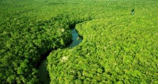 氣候變遷造成大量雨林消失。(圖片摘自網路)