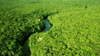 Photo of 減碳、植樹、護雨林 台灣齊心響應世界地球日