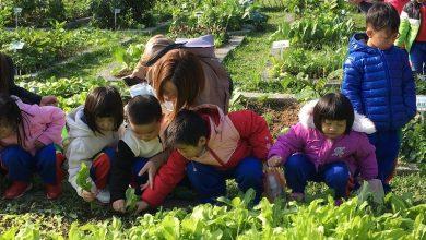 Photo of 自家陽台、屋頂種蔬果 體驗在家當農夫!
