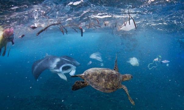 潛水人員拍下魚類及海龜與垃圾共存的環境。(圖片來源:國家地理)
