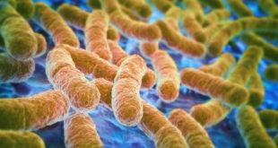 美國驚傳發現超級細菌,目前尚無抗生素可治癒。(圖片來源:huffingtonpost)