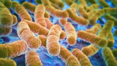 Photo of 超級細菌掘起!全球抗生素都無法阻止