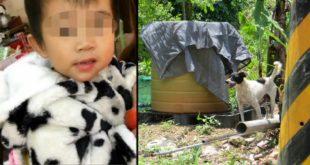 2歲的柯姓男童遭到至少6隻流浪犬攻擊、啃咬,男童身上有百餘處撕裂傷及咬傷。(合成圖/圖片來源/台中市政府提供)