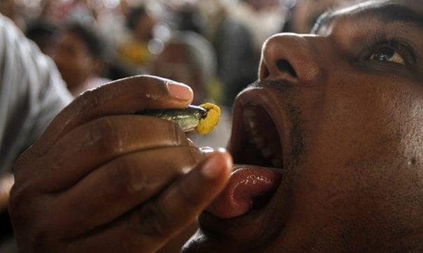 療法就是將黃色膏狀物放入沙丁魚口中,讓病患吞入。(圖片來源:ibtimes)