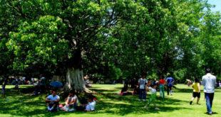 炎熱的夏日,許多民眾喜歡到大樹下乘涼消暑。(圖片來源:翻攝網路)