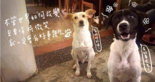 店家呼籲民眾,對寵物來說主人是他們的一切,千萬別輕易棄養。(圖/浪浪別哭授權提供)