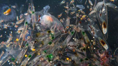 Photo of 「微塑膠」嚴重污染海洋 吞下肚恐是塑膠毒海鮮