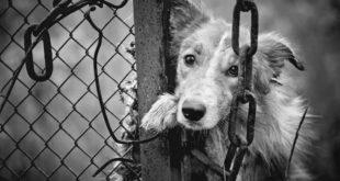 國軍日前爆發虐殺流浪犬事件,立法院今(7)修改動保法,加重虐待動物的罰則,此條款也被外界被稱為「小白條款」。(圖片來源:123rf)