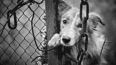 Photo of 動保法修正「小白條款」!虐待動物最重可罰200萬