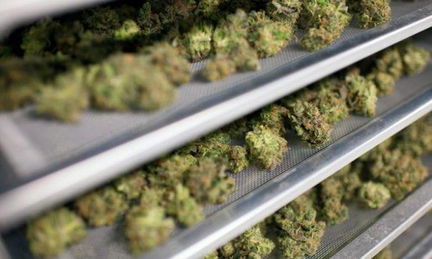 有專家指出,微軟大數據背後其實是幫助大麻商優化產品。(圖片來源:fortune)