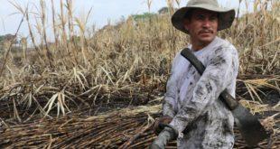 薩爾瓦多的甘蔗採集工人,每天頂著豔陽辛苦揮汗工作,由於長時間在大太陽下工作,讓他們反覆脫水,許多人得了原因不明的慢性腎臟病。(圖片來源/翻攝自網路)