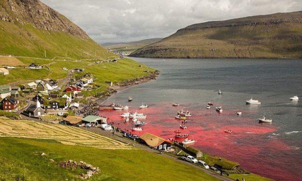 丹麥法羅群島風景好,每到夏季都有一項駭人聽聞的傳統。(照片來源:海洋保護協會)
