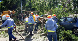 高雄市遭受颱風侵襲,路樹倒塌情況嚴重,環保局和國軍協助清掃中。  圖片來源:陳菊臉書