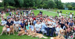 上百名網友帶著黃金獵犬,一起為腦癌男孩善杰慶生。(圖片來源:新加坡聯合晚報)