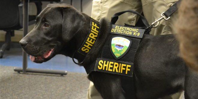 警犬URL,擁有超靈敏嗅覺,可聞出電子裝置散發出的獨特化學成分氣味,屢屢幫忙破案,而有「色情剋星犬」之稱。(圖片來源/翻攝自網路)