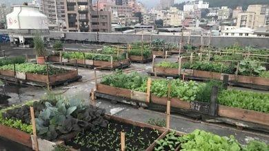 Photo of 田園城市下一階段 柯:明年推「綠屋頂」