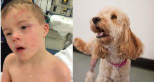 狗狗泰迪發現小主人掉入烘衣機中瘋狂吠叫提醒,因此救了他一命。(圖片來源:http://www.belfastlive.co.uk/)