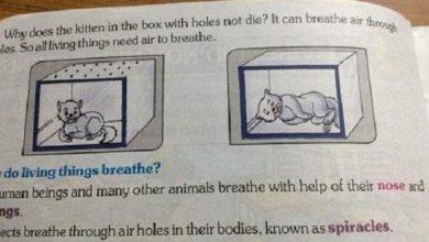Photo of 印度教科書竟教學童做實驗悶死貓 家長:應全面回收!