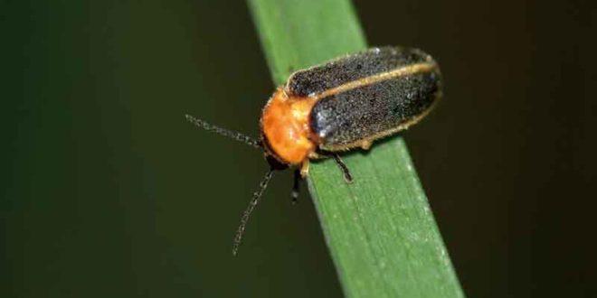 台灣之光!北市公園重現消失25年的螢火蟲