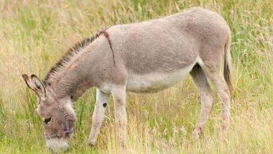 Photo of 人獸交染致命病毒!15少年集體性侵驢子染狂犬病