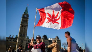 Photo of 加拿大明年合法賣大麻 省長家長抗議過於急促