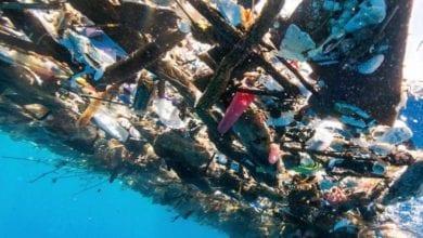 Photo of 加勒比海域美麗不再 無邊際垃圾海摻屍體跟塑膠物