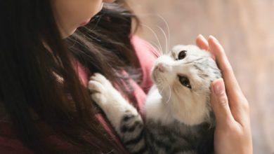 Photo of 「貓流感」傳給人? 研究:不排除爆發流行