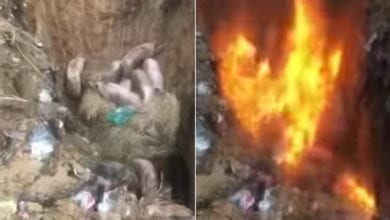 Photo of 中國非洲豬瘟失控 火烤撲殺、滿街吐血死豬