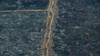 Photo of 巴西3個月5億蜜蜂集體暴斃 開墾雨林影響巨大