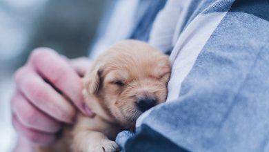 Photo of 毛孩爸媽享好康/新北市推這個 參加可享免費狂犬病疫苗及寵物用品優惠